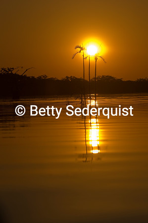 Palm Trees and Sunset, Laguna Grande, Amazon