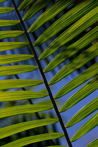 Rainforest palm frond
