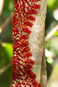 Aposematic caterpillar mass