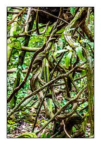 Lianes serpent