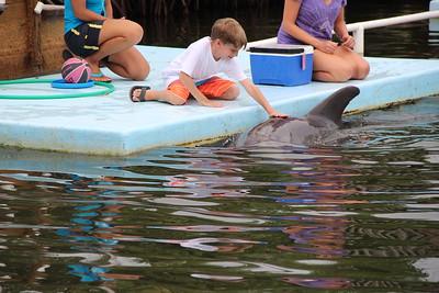 Dolphin in the Keys 2017