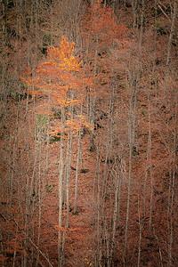 Massif des Aravis / Alpes - Novembre 2014