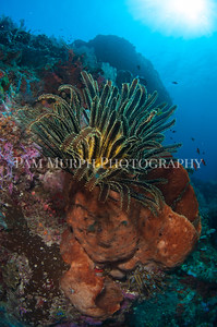 Reefscape from Ambon