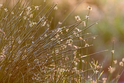 Dry grasses are the primary vegetation