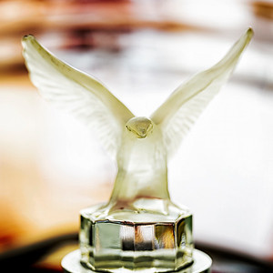 Bird Hood Ornament Copyright 2020 Steve Leimberg UnSeenImages Com _DSF7193