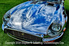 Blue Jaguar - Copyright 2015 Steve Leimberg - UnSeenImages Com _H1R8590