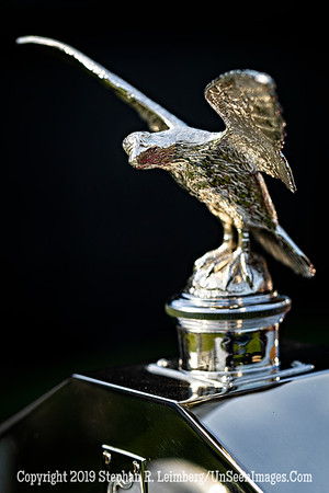 Bird Hood Ornament - Copyright 2019 Steve Leimberg UnSeenImages Com _A6I4933
