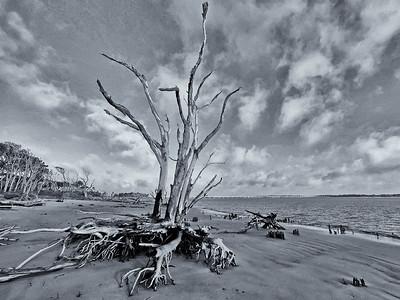 Amelia Island & Surrounding Areas