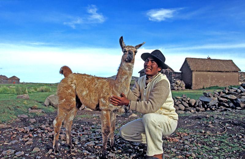 Lama's shepherd