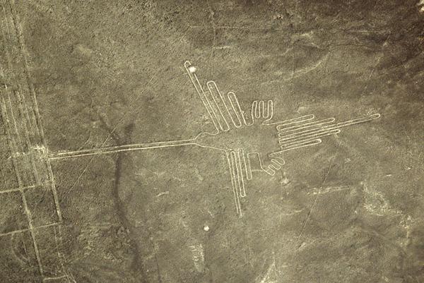 Nazca- Humming Bird