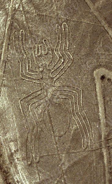 Nazca- Spider