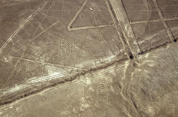 Nazca- Spider 1