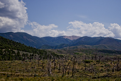 Forest Mountain Photograph 11