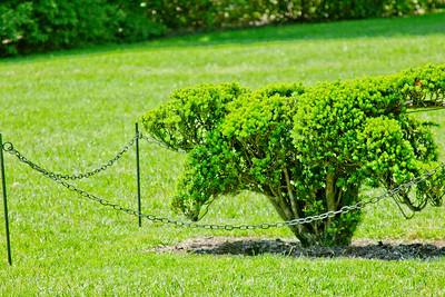 Topiary Gardens 2