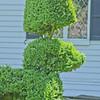 Topiary Gardens 7