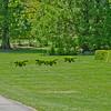 Topiary Gardens 40