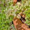 Topiary Gardens 42