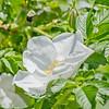 Topiary Gardens 57