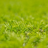 Topiary Gardens 48