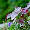 Topiary Gardens 76