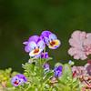 Topiary Gardens 83