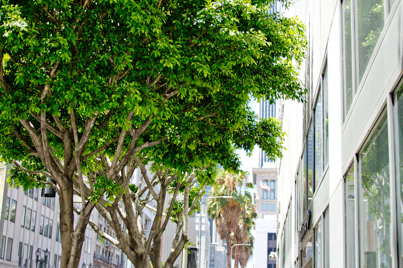A Walk around downtown Los Angeles Photograph 12