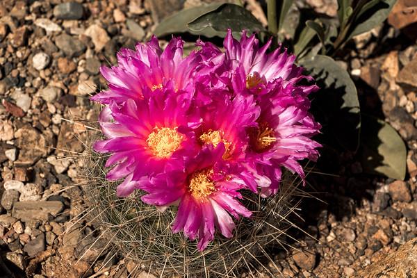 160227_AZ_Tucson_139-1p1