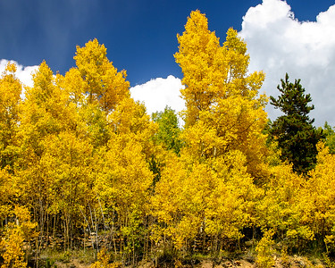 080927-ColorfulColorado (1071)-11