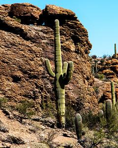 160227_AZ_Tucson_111-1