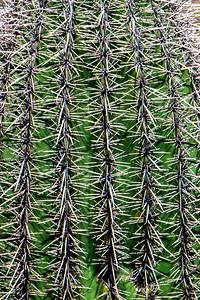 160227_AZ_Tucson_109-2