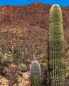 160227_AZ_Tucson_108-1p1