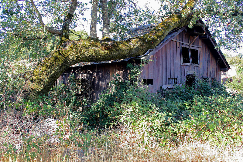 This barn was built to last, the tree was probably no more than a sapling at the time