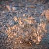 Desert May Never Bloom