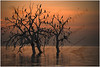 Migratory birds of Salton Sea National Wildlife Refuge, California