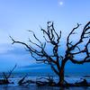 Moonrise on Driftwood Beach