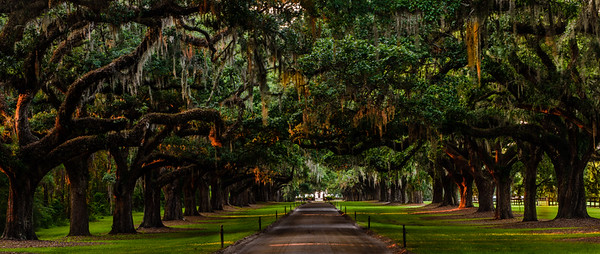 Boone Hall Plantation, S.C.