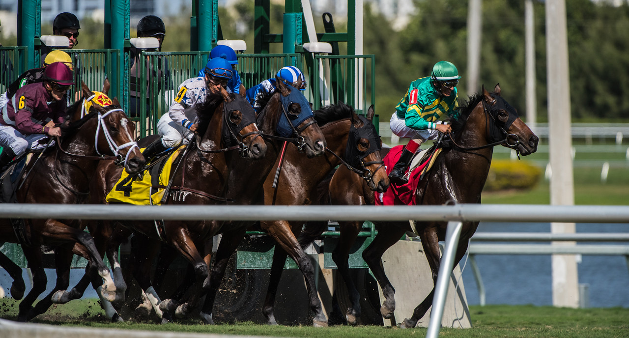 """""""And they're off""""    The start of a race on turf"""