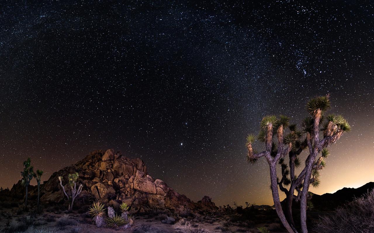Milky Ways and Joshua Trees  |  Joshua Tree National Park, California