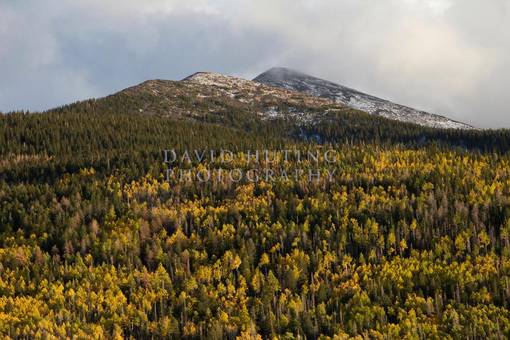 Yellow Aspens Mountain View Zoomedc