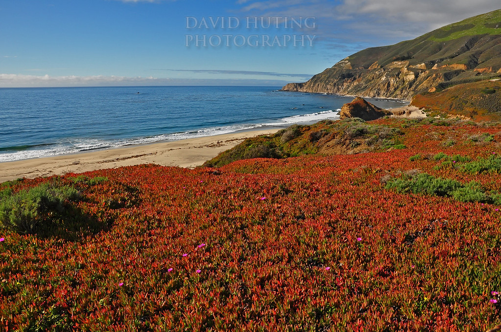 Colorful California Coastline