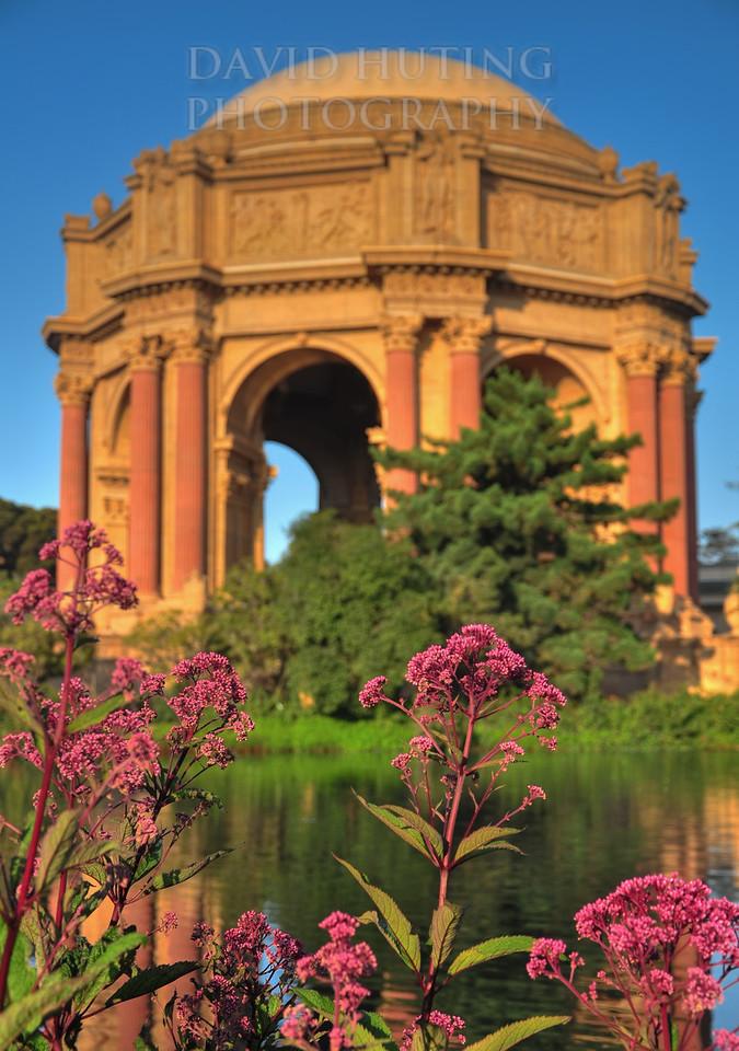Exploratorium Flowers Macro HDR