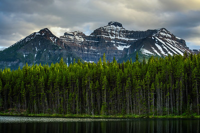 Deep forest along Herbert Lake in Banff National Park, Canada