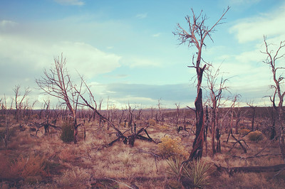 Barren Wilderness