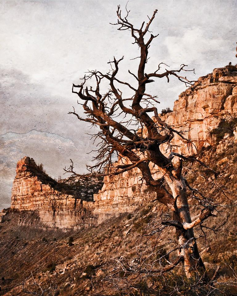 Mesa Verde Rock