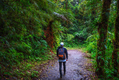 Tourist walking through the jungle of Monteverde Cloud Forest, Costa Rica