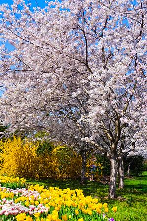 Spring, Dallas Arboretum