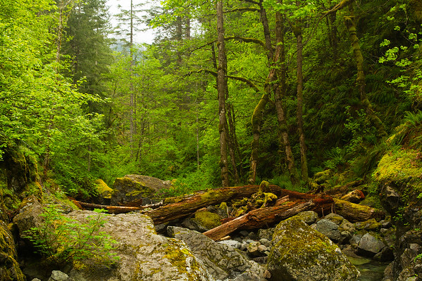 River flowing from the Hemline Falls, Oregon