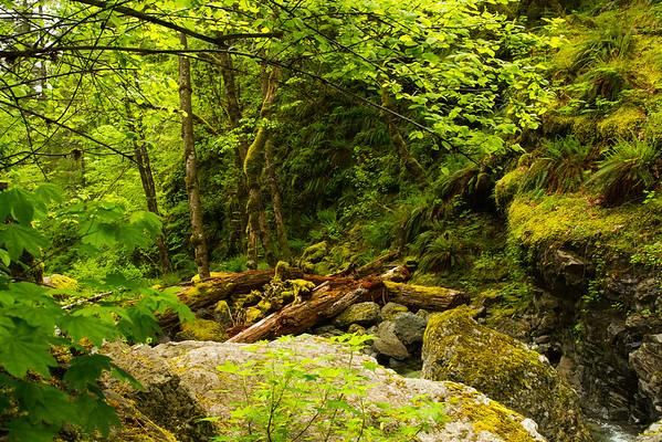 Forest at Hemline Falls, Oregon