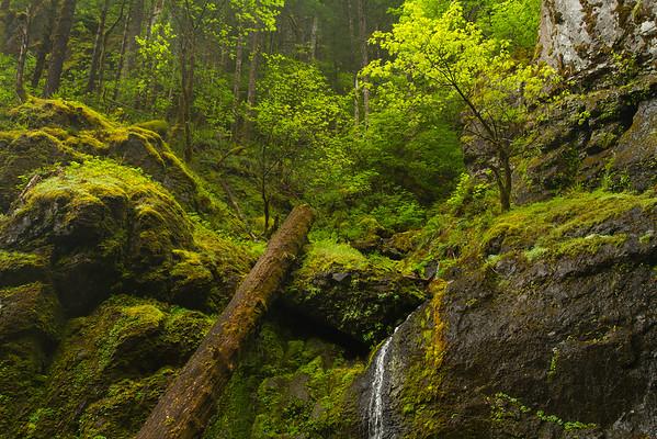 Smaller waterfall near Hemline Falls, Oregon