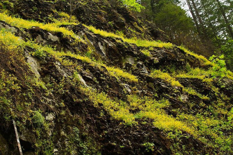 Wildflowers growing near Hemline Falls, Oregon.